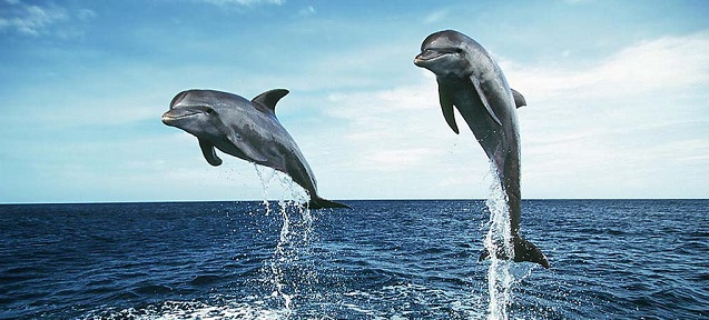 jumping_dolphins_wallpaper-29156_small