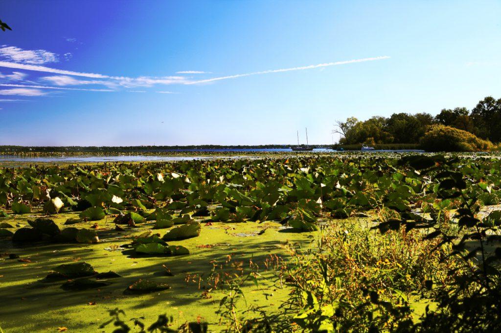 Озеро Мендота. Фото: Elena Shirikova