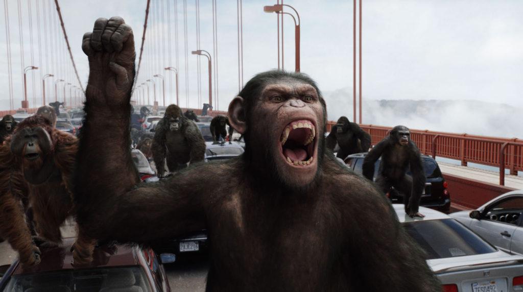 Пять обезьян: как стадное поведение мешает нам добиться успеха