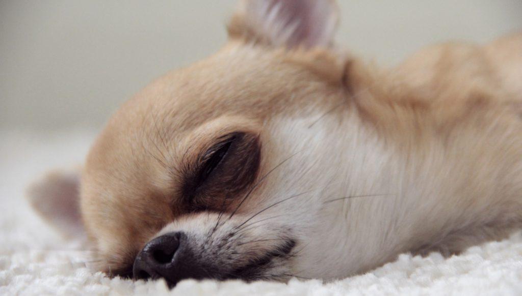 Исследование: спать на работе не стыдно, а полезно!