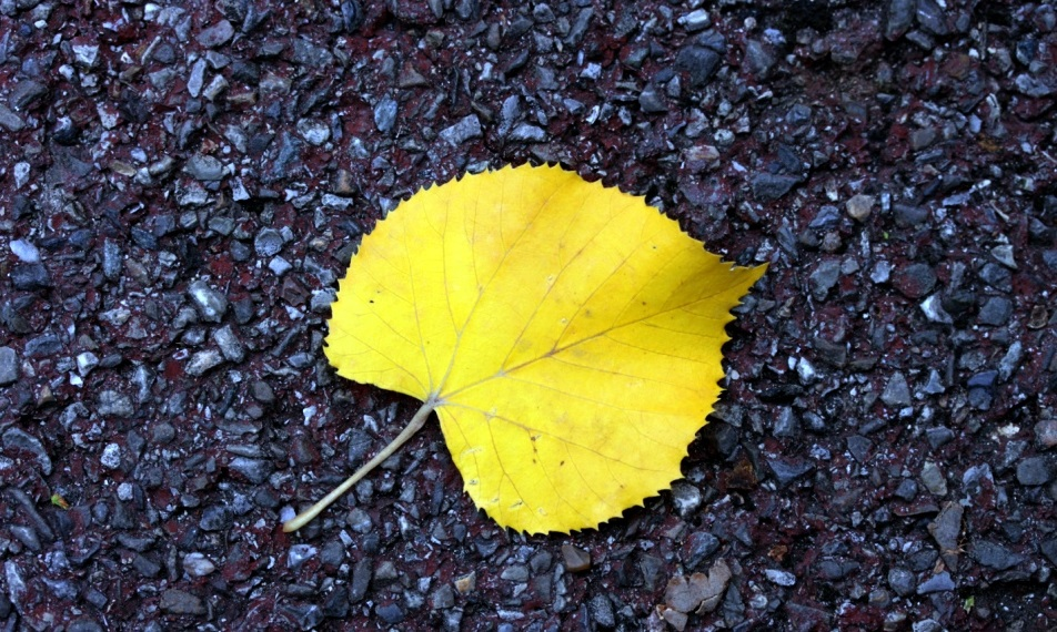 6 способов справиться с творческим застоем и унынием