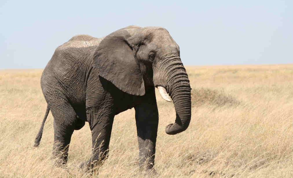 Слоны и погонщики: как найти баланс между эмоциями и логикой