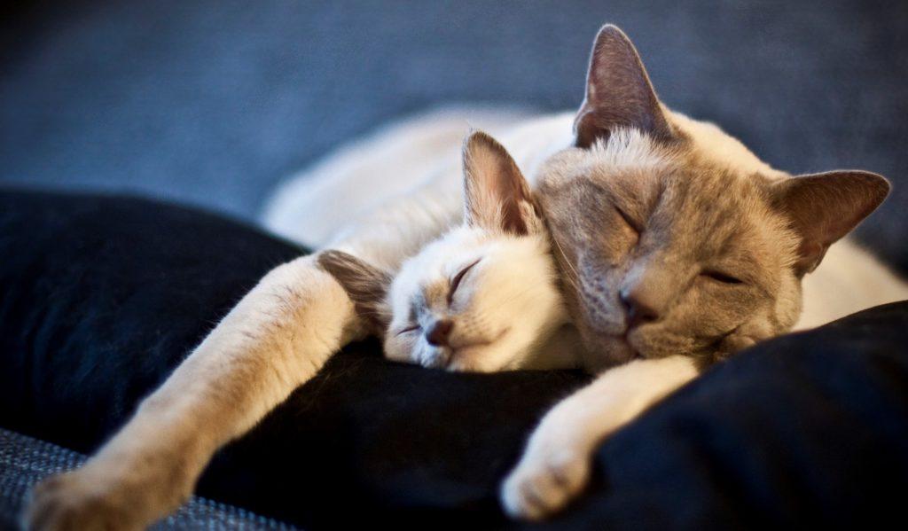 Спать или не спать: кому сон полезен, а кому — не очень