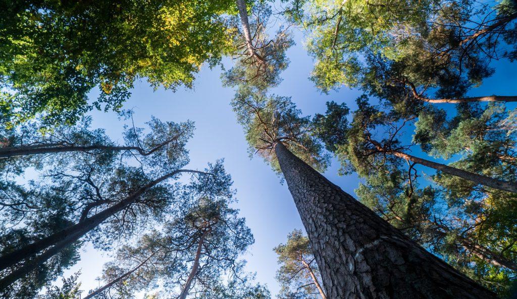 Дерево устойчивости: как подготовиться к любому стрессу