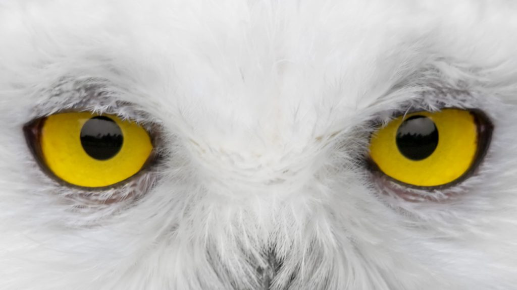 Заглядывая в душу: неожиданные эффекты зрительного контакта