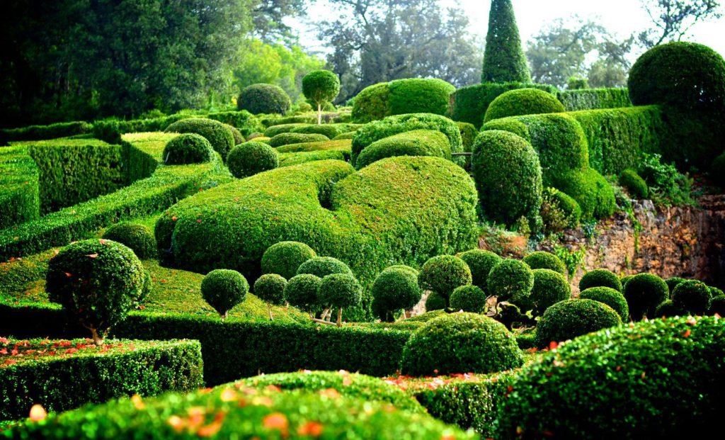 Цветущий бизнес: почему хороший руководитель должен быть садовником