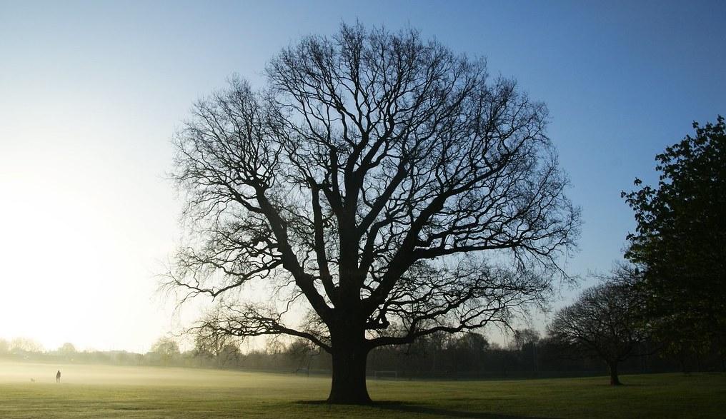 Дерево логики: как решать насущные проблемы по науке