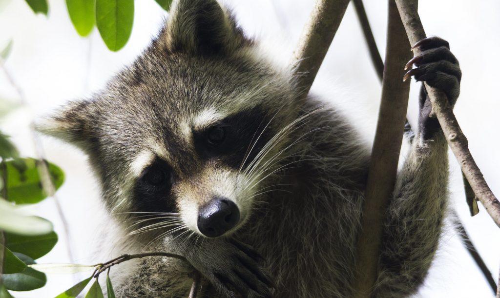 Городская эволюция: становятся ли животные умнее благодаря человеку?