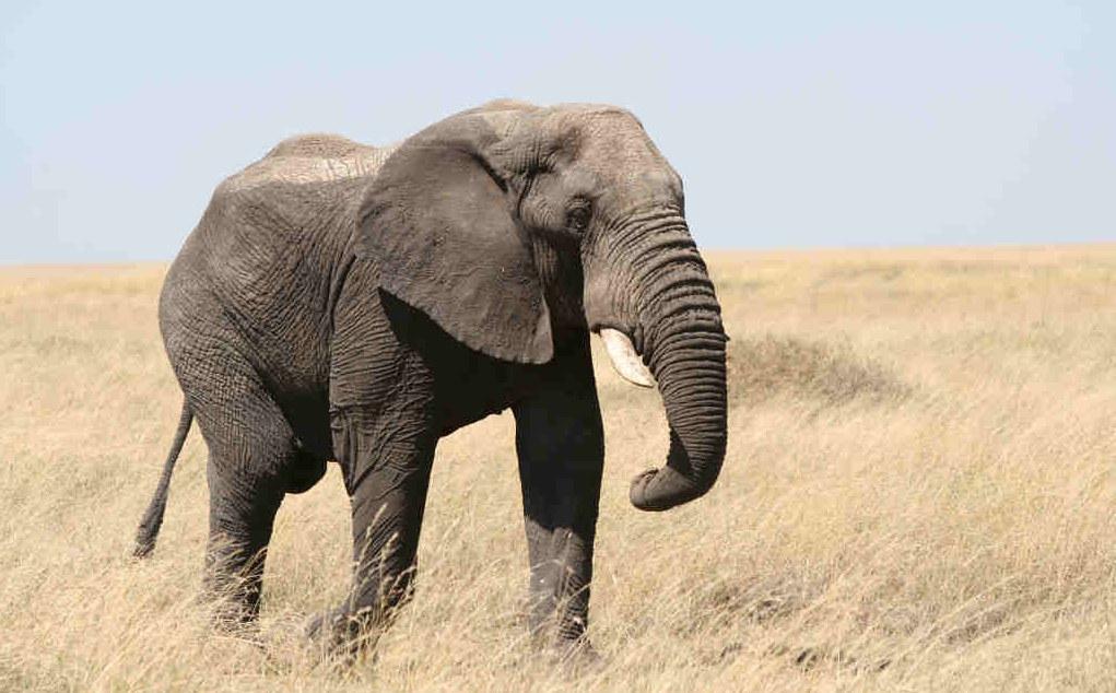 Правила слонов: 5 шагов к прогрессу в жизни и работе