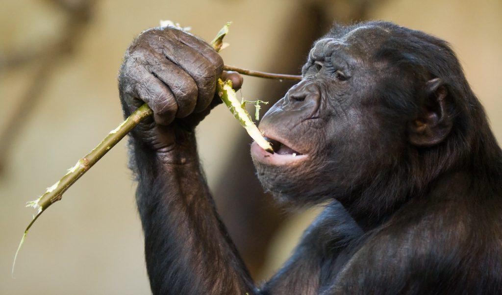 Выживает добрейший: капризы эволюции