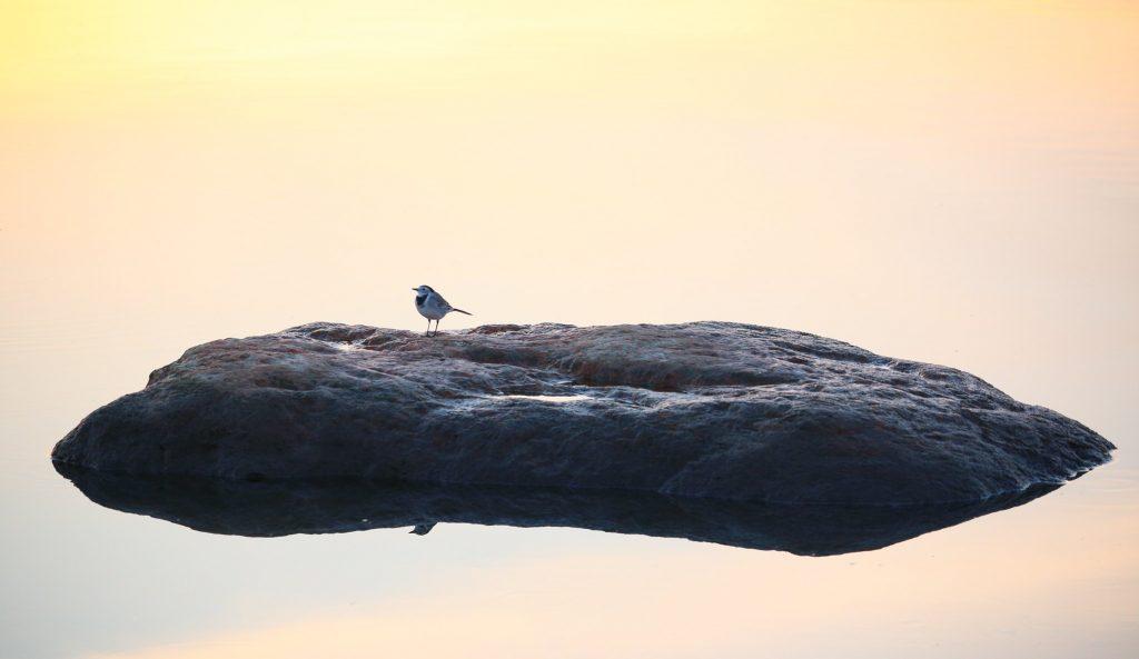 Искусство одиночества: как получить пользу от изоляции